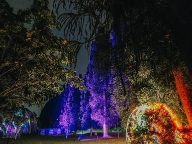 Inovasi Baru, Kebun Raya Bogor Hadirkan Wisata Malam