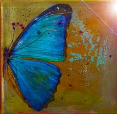 butterfly blue.jpg
