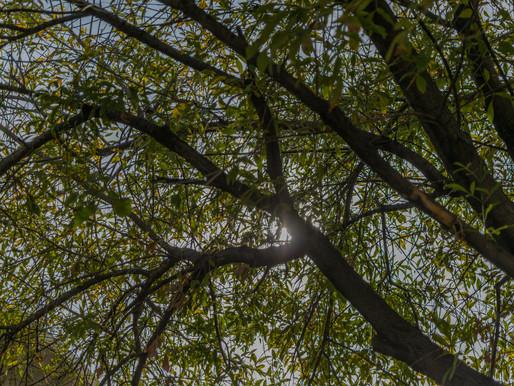 Baum significa árbol