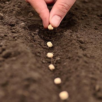 planting-seeds jpg.jpg