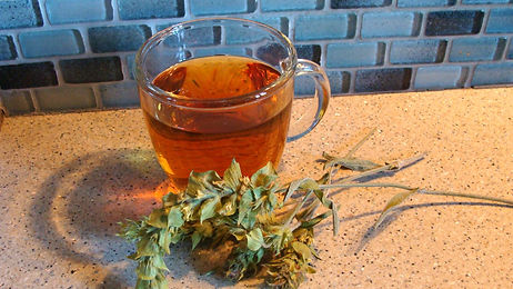 Greek mountain tea Sideritis scardica
