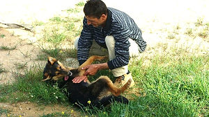 ein Grieche mit Schäferhund
