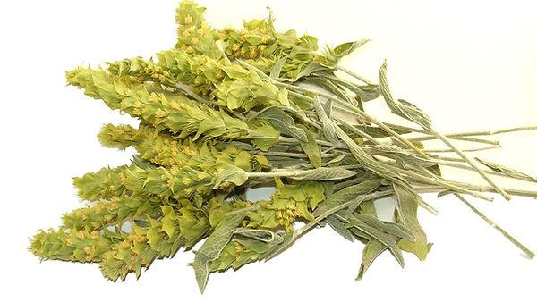 thé grec des montagnes bio