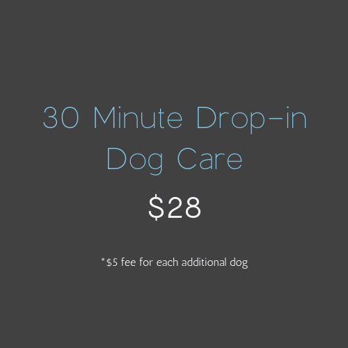 30 Minute Drop-in Dog Care