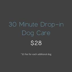 30 Minute Drop-in Dog Care