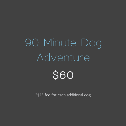 90 Minute Dog Adventure