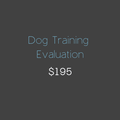 Dog Training Evaluation