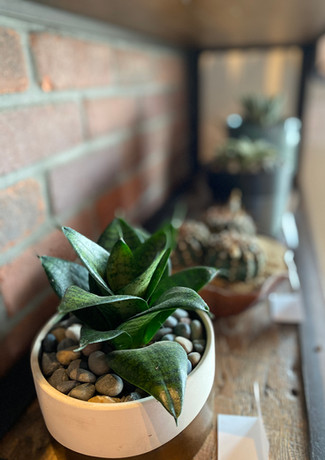 row of cacti and succulents