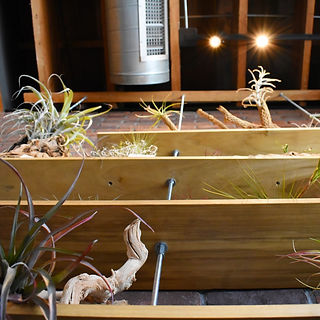 Shelves with plants