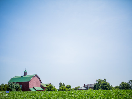 Fields on West Lake Wedding | Stephanie & Jamie | Barn Wedding  Prince Edward County