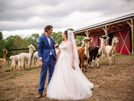 Alpaca Farm Wedding | Durham Region Micro Farm Wedding | Sam & Ben