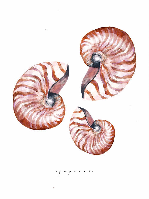 Arena Nautilus