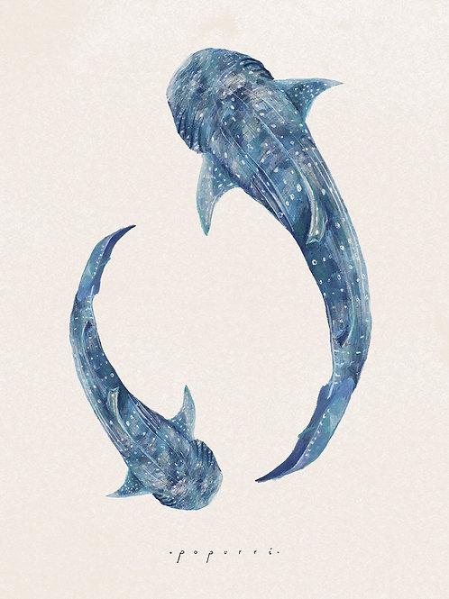 Belice Tiburones