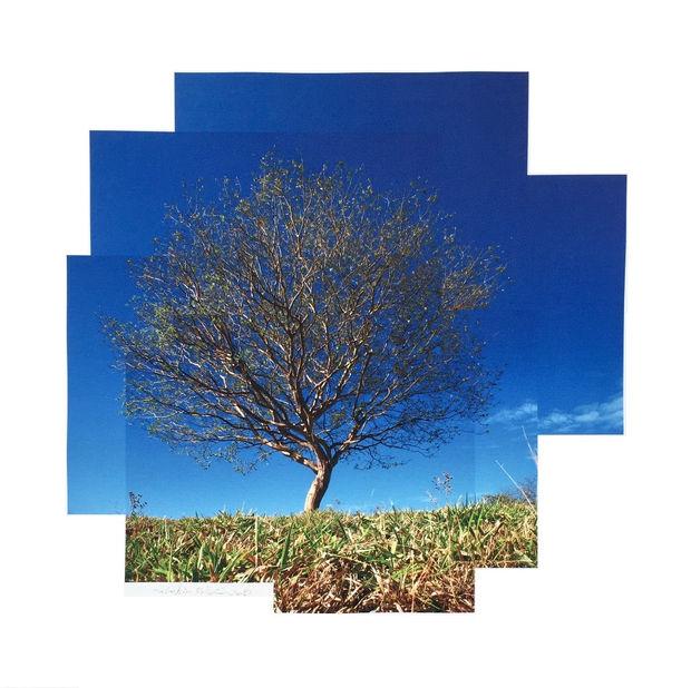 La Garita's Tree