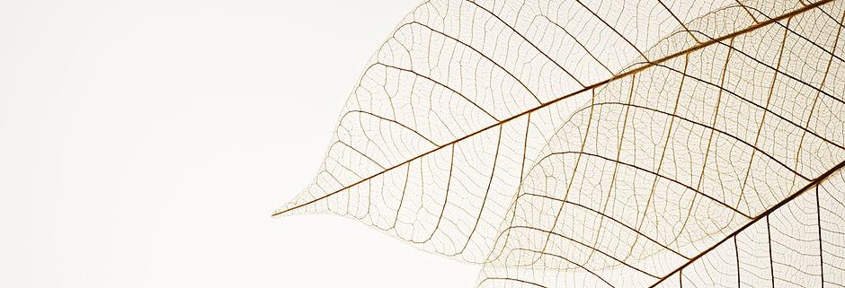 Leaf - Ceclia Land, LCSW