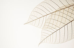 Twee gedroogde bladeren