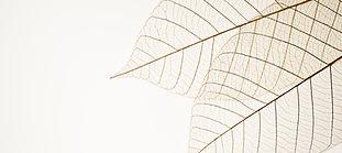 Dos hojas secas