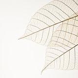 兩個幹樹葉