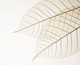 Bladeren, transparant, puur & prachtig