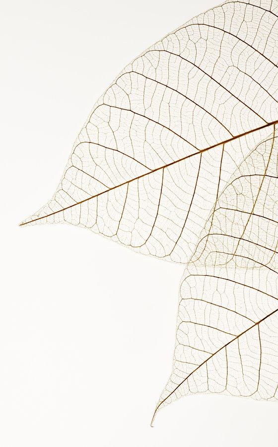 To tørrede blade