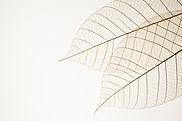 Duas folhas secas