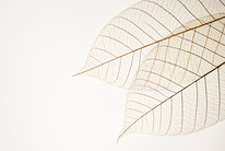 Due foglie secche