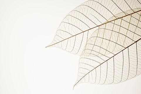 二つの乾燥した葉