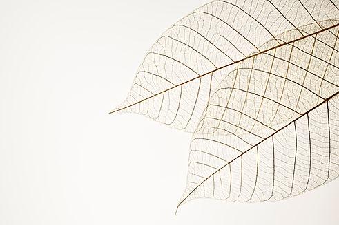 Два сухих листьев