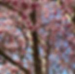 Magnolia Skies - Kelly Meehan.jpg