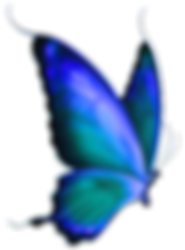 transparent-blue-butterfly-clip-art-j6v1