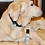Thumbnail: Hot Spot & Itch Relief Serum for Pets
