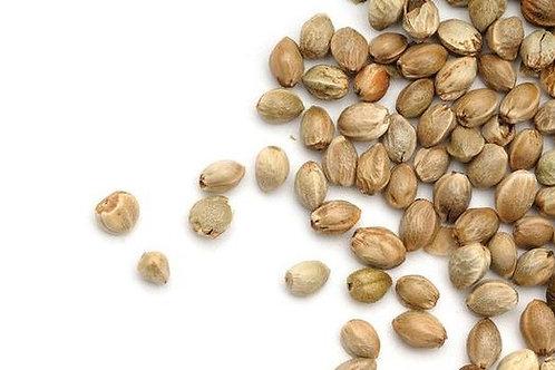Certified Hemp Seeds - Markant - 100 seeds