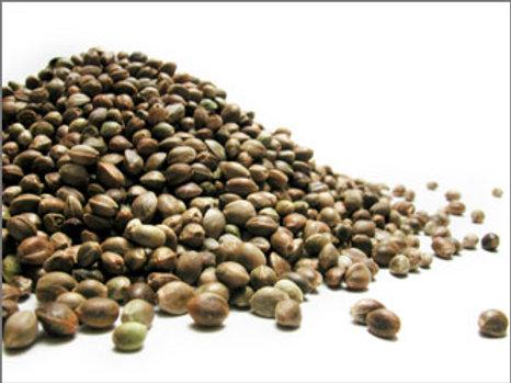 Certified Hemp Seeds, Secuieni Jubileu, 1000 seeds