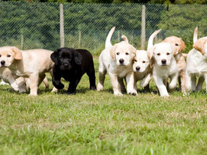 Team Neon Caffeine are fundraising for Guide Dogs