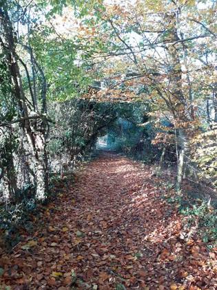 Footpath towards Avon Farm