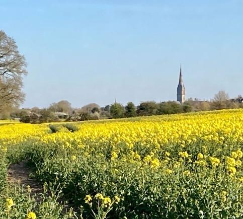 Looking towards Salisbury Cathedral