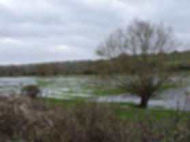 Water Meadows Feb 2020.jpg