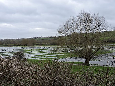 Water Meadows Feb 2020.jpg
