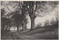 The Avenue Picture1.jpg