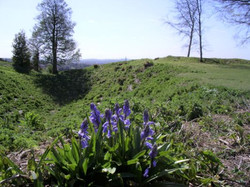 Bluebells over Old Sarum