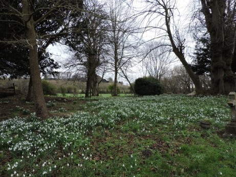 Snowdrops in the churchyard11 Feb 2019