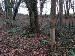 Blue trail waymarker