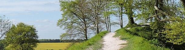 path on Old Sarum for header.jpg