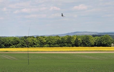 kite kite (1).jpg