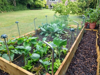 Raised vegetable bed created during lockdown at Portway Fosse