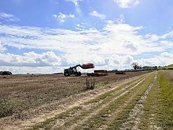 Harvest (1).jpg