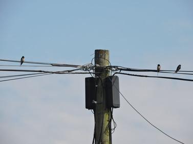 3 swallows 12 April 2020.jpg