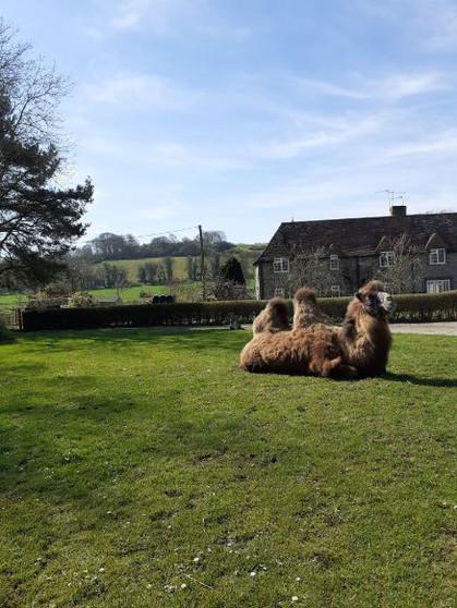 Camel 23 March 2020 (1).jpg