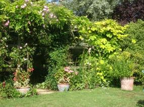 Smalll Magnolia lawn