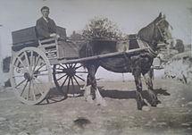 pony & trap.JPG